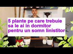5 plante care nu trebuie sa-ti lipseasca din dormitor, pentru un somn bun! - YouTube Youtube, Indoor Plants, Make It Yourself, Blog, Garden, Interior, Design, Strawberry Fruit, Simple