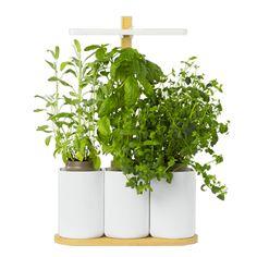 Smart Lilo, le potager connecté pour vos plantes
