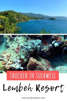 Lembeh Strait Tauchen in Sulawesi Indonesien. Einzigartiger Tauchplatz und Muck-Diving-Mekka mit einer hohen Dichte und Vielfalt ungewöhnlicher Meereslebewesen. Anglerfische, Nudibranches und die sogenannten Critters, Kleinstlebewesen, die man teilweise nur hier findet. Hoteltipp: Lembeh Resort, perfekt um die berühmte Lembeh Strait (Lembeh Straße) mit ihrer Unterwasserwelt zu erkunden. www.gindeslebens.com #Sulawesi #Indonesien #TauchenSulawesi #LembehResort #LembehStrait #CrittersLembeh Jimbaran Bali, Koh Tao, Snorkeling, Southeast Asia, Places To See, To Go, Island, Explore, Mountains