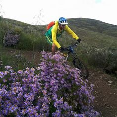 Spring flowers & singletrack switchbacks Cape Town, Spring Flowers, South Africa, Cycling, Places, Winter, Winter Time, Biking, Bicycling