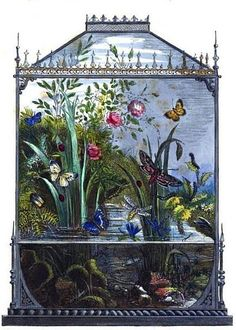 Frontispiece (detail) from 'The Butterfly Vivarium or Insect Home' by Henry Noel Humphreys, 1858 Vivarium, Paludarium, Botanical Illustration, Botanical Prints, Illustration Art, Antique Illustration, Birds In The Sky, Nature Journal, Butterfly Art