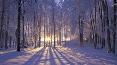 Wallpapers Sun Snow Forest High Quality And Resolution   1920x1080