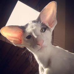 Meet Teddy aka Dobby Cat! - We Love Cats and Kittens