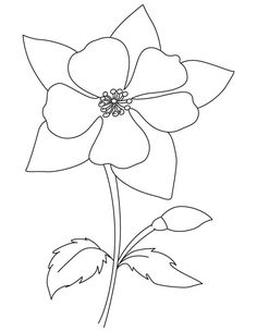 Blooming Columbine Coloring Page
