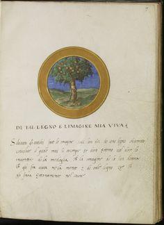 sonnet 61 francesco petrarch