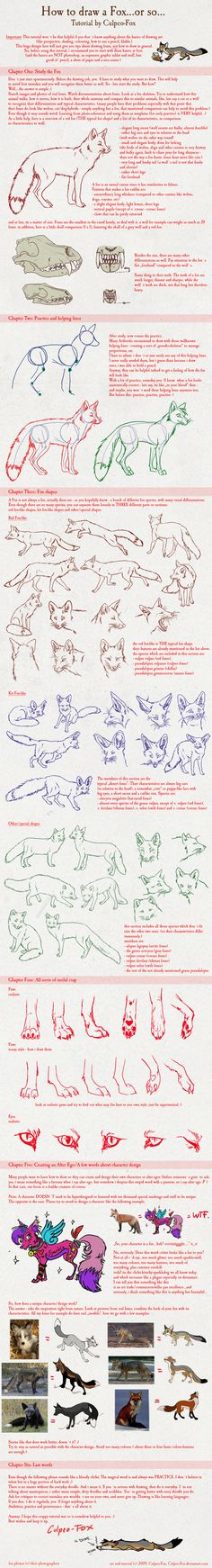 Fox Tutorial by Culpeo-Fox.deviantart.com---- Be careful reading this one, there are a few bad words at the bottom, but I mostly repinned for the fox poses.
