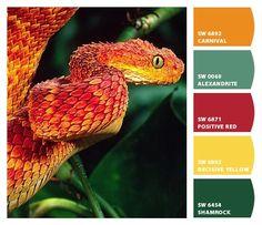 ‿✿⁀ Snake ‿✿⁀ ColorSnap by CNH