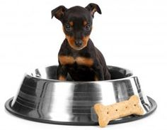 RECALL ALERT: Petco Issues Recall & Warning on Stainless Steel Dog Bowls