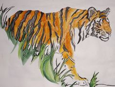 Indian Ink and water color Tiger
