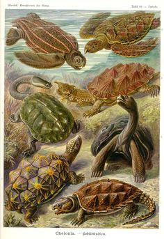 <b>Ernst Haeckel doesn't need no stinkin' camera.</b>