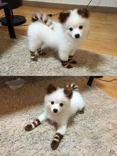OMG, this little cutie is so cute he looks very fluffy and warm!! #Fluffy and Cute