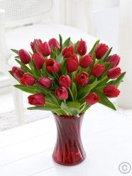 20 red tulips in vase to davao Tulips In Vase, Red Tulips, Tulips Flowers, Beautiful Red Roses, Amazing Flowers, Beautiful Flowers, Cranberry Glass Vase, Anniversary Flowers, Vase Arrangements