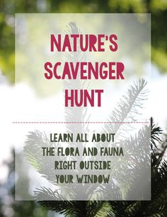 A nature hunt in your backyard — Pars Caeli