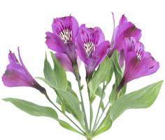 Purple Alstroemeria Peruvian Lily  #flowers #centerpiece #bouquets #wedding #peonies #bulkflowers #roses #peony #tulips #party