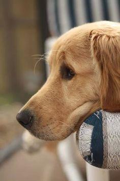 COMPRATE #ALOE #VERA SU http://malobo62.succoaloevera.it/ #succoaloevera #foreverlivingpozzuoli #animali_domestici Conoscete il nostro prodotto per i vostri animali di casa? Contattateci o consultate il nostro sito
