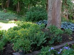 A shade garden with lots of colorful perennials.