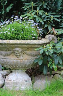I love urns . . . And I love this contrast . . . Heavy urn and delicate flowers!