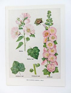 Vintage Botanical Illustrations --  Peony and Thistle Paper
