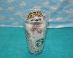 Naming a pet hedgehog? Here's a list of hedgehog names.