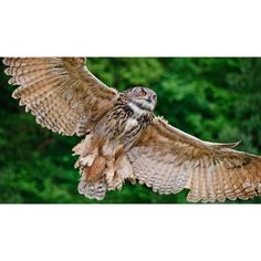 Owl Wings Are Helping Silence Airplanes Fans And Wind Turbines Liked On Polyvore