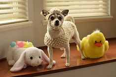Small Dog Lamb Hat and Sweater