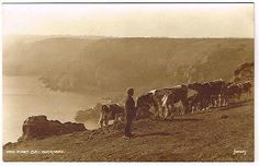 OLD RURAL POSTCARD ICART BAY GUERNSEY CHANNEL ISLANDS JUDGES REAL PHOTO 1930S