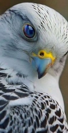 Wonderful Snap Shots birds of prey hawks Suggestions Being a wildlife connected with animals digital photographer, the main situation nearly all criticize about m Pretty Birds, Beautiful Birds, Animals Beautiful, Cute Animals, All Birds, Birds Of Prey, Love Birds, Funny Bird, Tier Fotos
