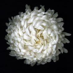 'Nine Flowers' series by NY-based  American digital artist Katinka Kamatson. via Things that Quicken the Heart
