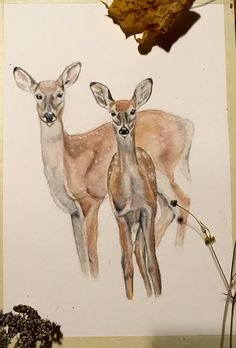 Deers, deer, bambi, watercolor, portrait Reference photo by Jenni Merilä Deer Illustration, Jenni, Bambi, Kangaroo, Watercolor Art, Giraffe, Moose Art, Portrait, Animals