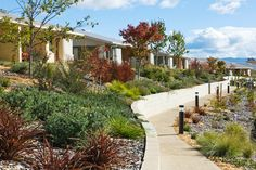 Kangara Waters, Belconnen // Taylor Brammer Landscape Architects Water Wise, Senior Living, Venice, Sidewalk, Backyard, Landscape Architects, Plants, Gardens, Patio