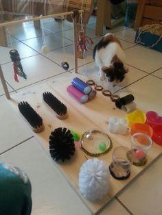 Katzenspielbrett