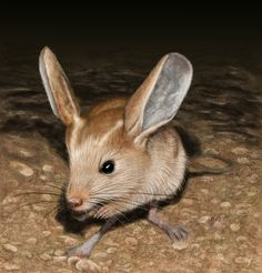 Long-Eared jerboa long eared jerboa by berilia rodents Felt Animals, Crochet Animals, Animals And Pets, Funny Animals, Cute Animals, Strange Animals, Beautiful Creatures, Animals Beautiful, Long Eared Jerboa