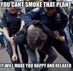 How dare you! #marijuana #weed #cannabis #420 #cannabiscommunity #funny #themarijuanaconsumer #CannabisMemes