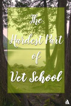 The hardest part of veterinary school isn't what you may think.