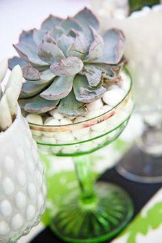 Succulents in green glassware  - Alchemy Fine Events www.alchemyfineevents.com