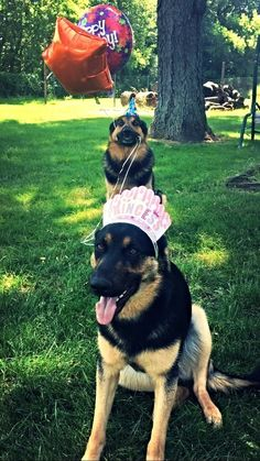 These two buds having a grand birthday celebration. | 23 Dogs Who Will Make You A Happier Person