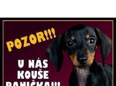 Panička Dogs, Animals, Animales, Animaux, Pet Dogs, Doggies, Animal, Animais