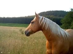 Recipes for horses: sweet feed, apple treats, mashes, cookies and more!