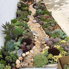 How To Use Succulent Landscape Design For Your Home Succulent Landscaping, Succulent Gardening, Landscaping With Rocks, Front Yard Landscaping, Planting Succulents, Planting Flowers, Garden Yard Ideas, Garden Projects, Gemüseanbau In Kübeln