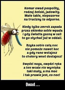 Polish Language, Haha, Funny Pictures, Geek Stuff, Humor, Memes, Travel, Fanny Pics, Geek Things