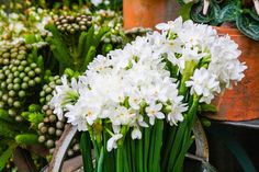 Holiday Garden Gifts: How To Force Bulbs, It's Easy! You need to do this NOW the first of Nov. if you want flower at Christmas!!!