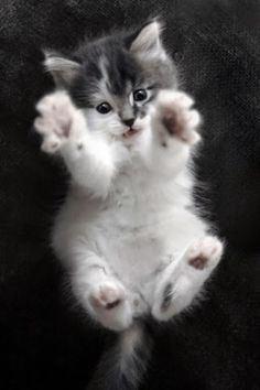 5 Easy tips for trimming your cat's nails. http://whatwomenloves.blogspot.com/2014/10/5-easy-tips-for-trimming-your-cats-nails.html