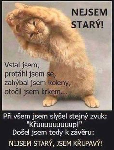 Nejsem starý! Good Jokes, Funny Jokes, Cat Exercise, Cute Images, Funny Photos, The Funny, Cool Words, Animals And Pets, Favorite Quotes
