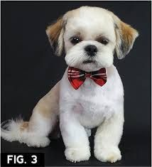 Image result for best shih tzu haircut