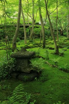 Giouji Temple, Kyoto,japan More Green Landscape, Landscape Design, Japanese Stone Lanterns, Woodland Garden, Photos Voyages, All Nature, Green Garden, Kyoto Japan, Okinawa Japan