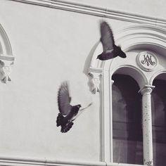 https://www.instagram.com/p/BDlHMOKxKMg/?taken-by=natura_ternura