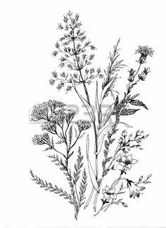 Belle monochrome noir et fleur blanche isol s Lignes et traits contour dessin es la main Banque d'images