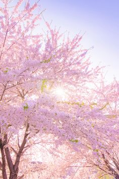 banshy:  写真   K Photo     Spring Into Color Busting Scenes