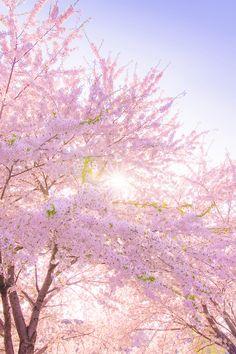 banshy:  写真 | K Photo     Spring Into Color Busting Scenes
