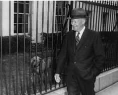 Heidi the Weimaraner (Dwight D. Eisenhower) Ike was gifted with a Weimaraner named Heidi from Postmaster General Arthur Summerfield. American Presidents, Us Presidents, Weimaraner, The One, Bo Obama, Dwight Eisenhower, Dressage Horses, Animal House, The Guardian